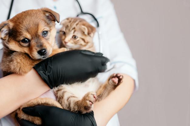 Pourquoi une assurance pour chien ?